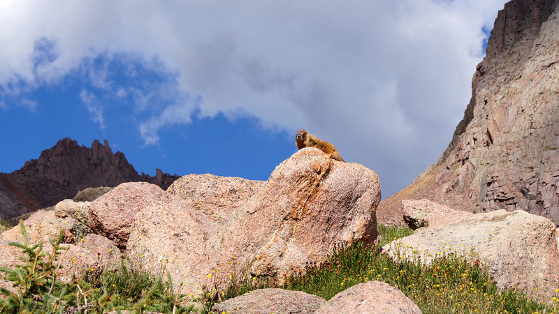 A Marmot lounges on a rock above the Chicago Basin; Colorado San Juans.