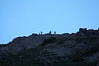 Early morning profiles of goats on the ridge above the Chicago Basin, Colorado San Juans.