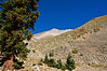 Mount Antero's west face and summit begin to appear at treeline; Colorado Sawatch Range.