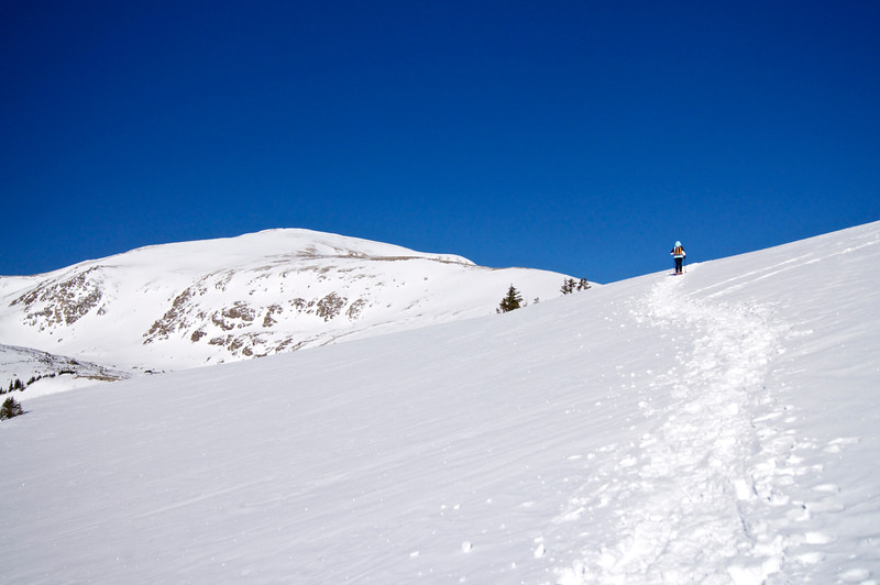On the southeast slopes of Mt. Elbert.  The heartiest and tallest trees at the very top of treeline are almost completely buried in snow at 12,000 feet.  Colorado Sawatch Range.