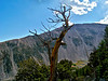 An ancient Bristlecone Pine at 12,000 ft. on Mt. Shavano, Colorado Sawatch Range.