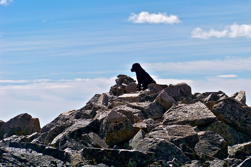 An adventurous pooch sits on the summit of Mt. Yale, Colorado Sawatch Range