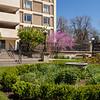 Garden area-11