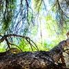 GriffithPark_Redwoods_151123_LAF_031