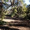 GriffithPark_Redwoods_151123_LAF_032