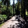 GriffithPark_Redwoods_151123_LAF_037