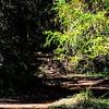 GriffithPark_Redwoods_151123_LAF_034