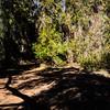 GriffithPark_Redwoods_151123_LAF_033
