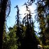 GriffithPark_Redwoods_151123_LAF_041