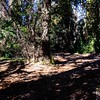 GriffithPark_Redwoods_151123_LAF_035