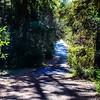 GriffithPark_Redwoods_151123_LAF_038