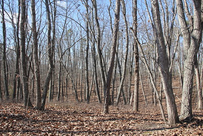 Approx. 50 acres of woodland