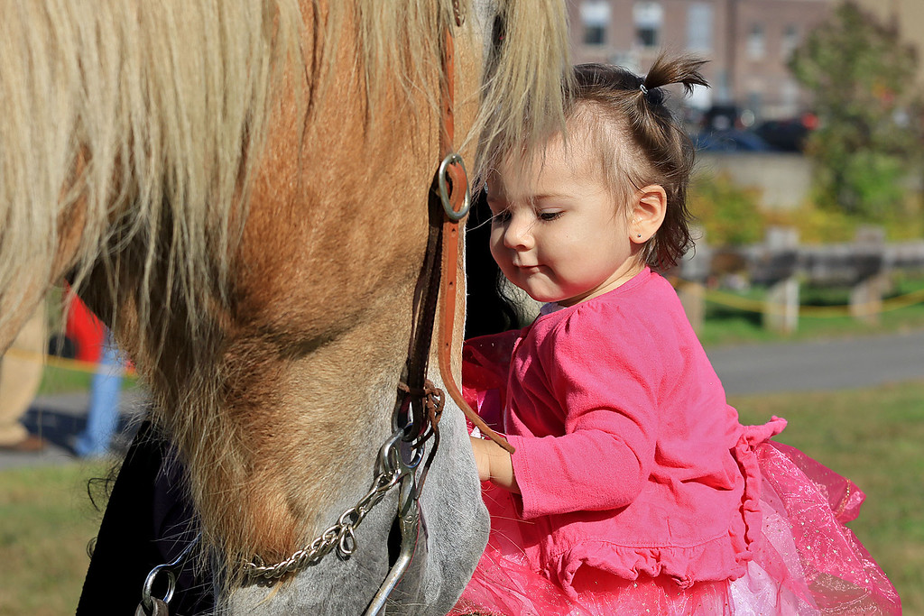 . The 15th annual Blacksmith Art and Renaissance Festival was held on Saturday, September 29, 2018. Amy Geary, 15 months, from Fitchburg pets Legato a Belgian horse that was at the festival. SENTINEL & ENTERPRISE/JOHN LOVE