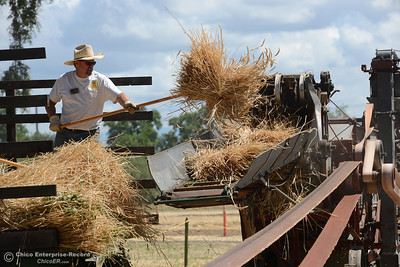 Randy Libby pitches hay into a threshing machine which separates the wheat from the chaff during the 15th Annual Old Fashioned Country Faire and Threshing Bee on Saturday, June 10, 2017, at the Patrick Ranch Museum in Durham, California. (Dan Reidel -- Enterprise-Record)
