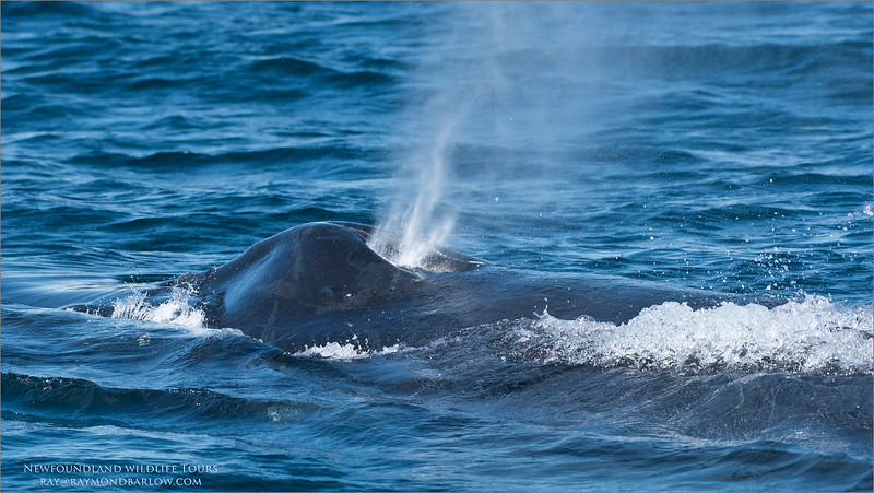 Imagine being about 10 yards from this whale?<br /> <br /> Incredible experience!<br /> <br /> Join me?<br /> ray@raymondbarlow.com
