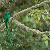 """The superb beauty of the """"Resplendent Quetzal!""""<br /> <br /> Thanks to the good people in the forests and farms of Costa Rica for giving these birds their habitat.  The people protect the avocado trees that these birds feed on, and make very sure the environment is as good as it can be!  This area is soooo clean!<br /> <br /> I have friends that monitor up to 8 pairs of nesting Quetzals, so we have good sightings each time we visit.  They take such good care of me!<br /> <br /> After 17 completed photo tours to Costa Rica, I am proud to say congratulations to all of my connections for doing such a great job preserving nature.<br /> <br /> Thanks to you people here on Google for sharing my works, and all the kind comments!  There are no better rewards then having nice people appreciate my work.<br /> <br /> Still 2 spots open for this next tour April 30th!<br /> <br /> Best regards!<br /> <br /> Resplendent Quetzal<br /> RJB Colours of Costa Rica Tour<br />  <a href=""""http://www.raymondbarlow.com"""">http://www.raymondbarlow.com</a><br /> 1/60s f/4.0 at 400.0mm iso200"""