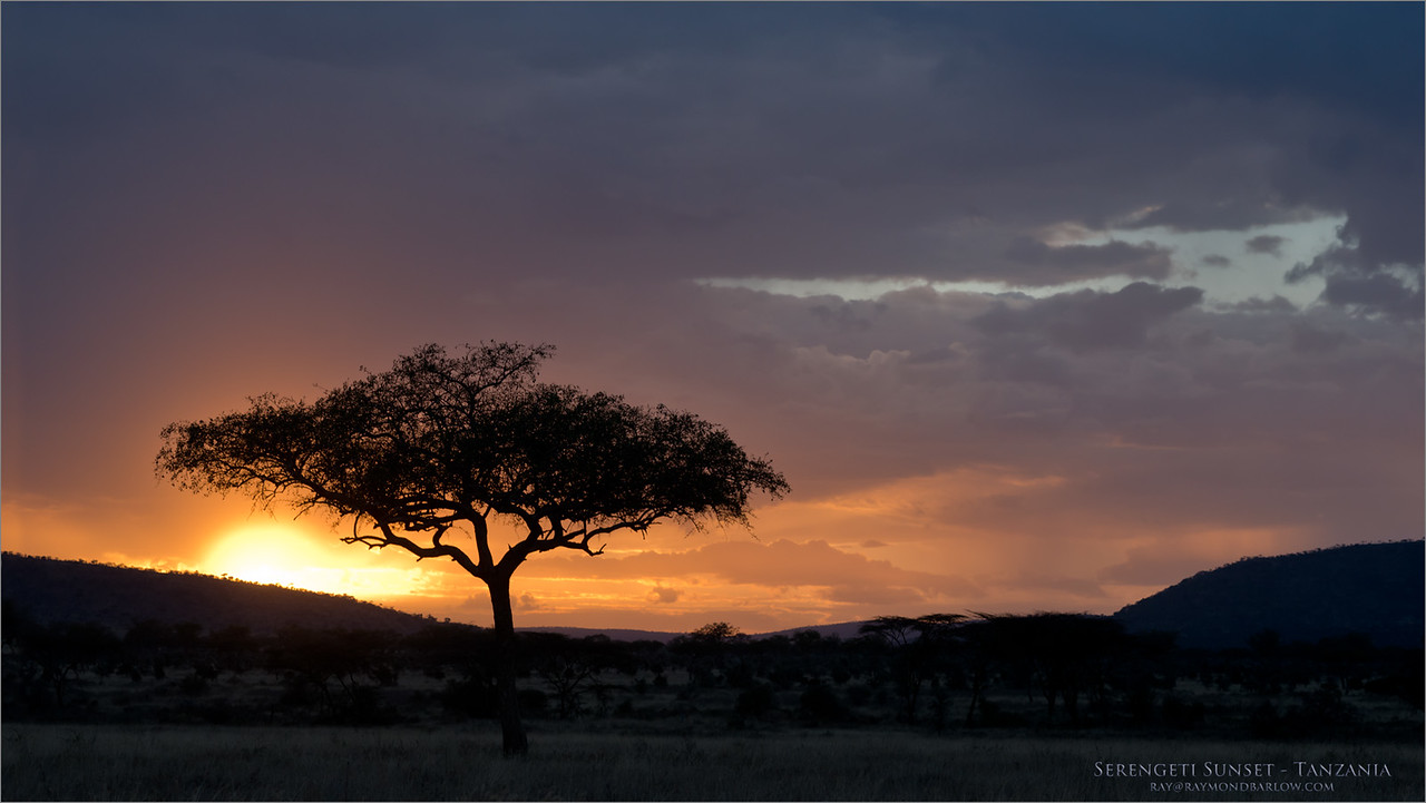 Serengeti Sunset<br /> Raymond Barlow Photo Tours to Tanzania Wildlife and Nature<br /> <br /> ray@raymondbarlow.com<br /> Nikon D800 ,Nikkor 80-200mm f/2.8D ED AF<br /> 1/80s f/9.0 at 112.0mm iso1000