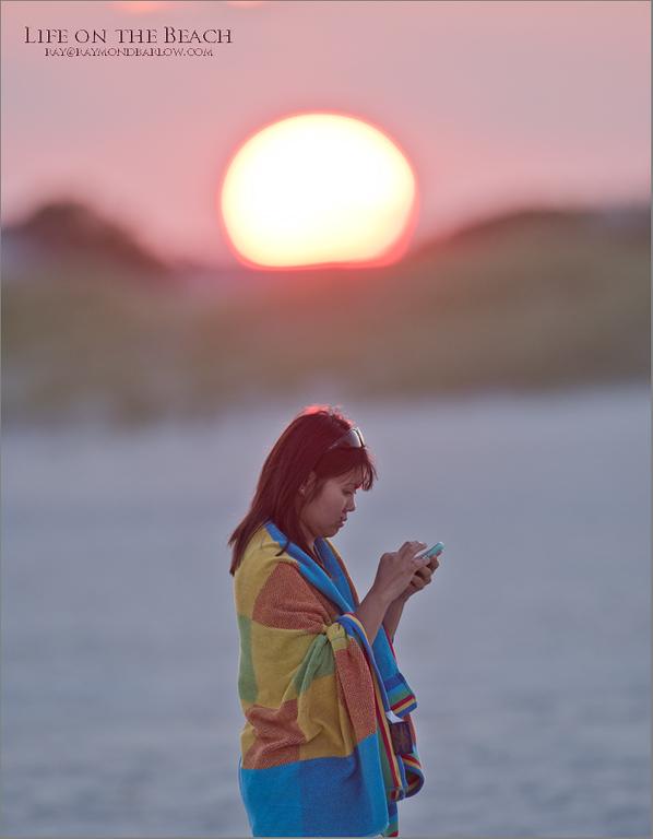 Daisy on the Beach<br /> New York Coast - 2017<br /> <br /> ray@raymondbarlow.com<br /> Nikon D810 ,Nikkor 200-400mm f/4G ED-IF AF-S VR<br /> 1/200s f/5.6 at 600.0mm