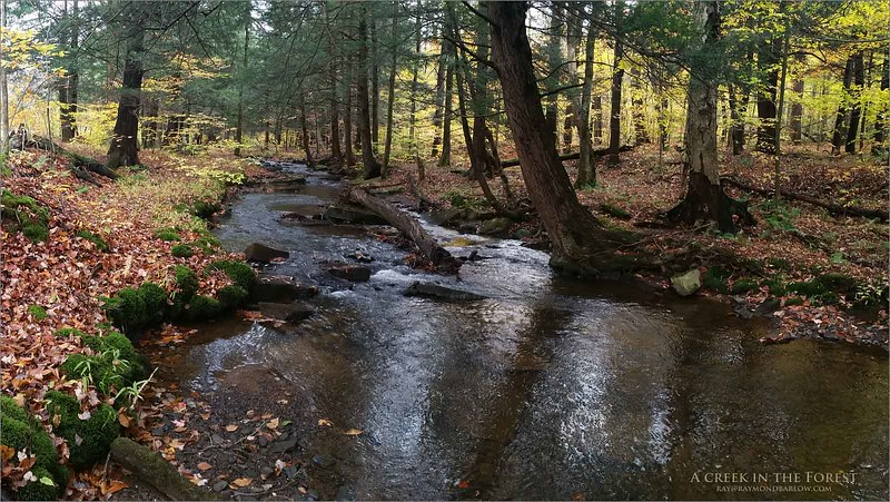A Creek in the Forest<br /> samsung SM-N910W8<br /> 1/100s f/2.2 at 4.6mm iso250