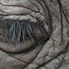 033 Elephant Eye with the Swarovski Spotting Scope in Tanzania