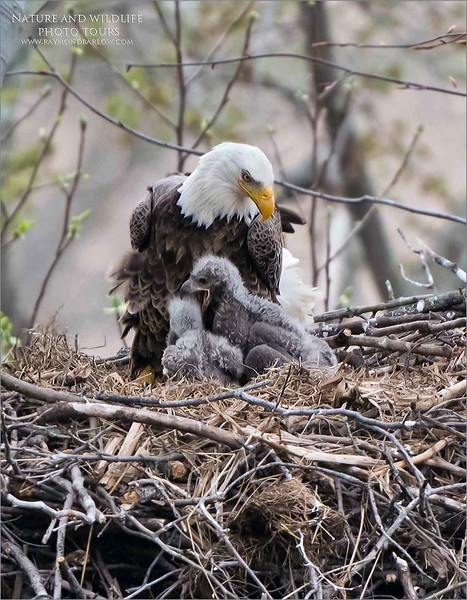 Eagles nest tours coming soon!<br /> ray@raymondbarlow.com
