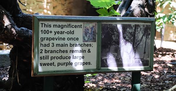 180623 UnderGround Gardens-0376