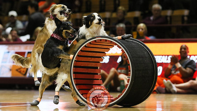 A team of dogs from Mutts Gone Nuts performs a variety of tricks and stunts for the game's halftime show. (Mark Umansky/TheKeyPlay.com)