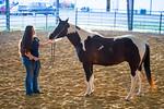 16348-event-Equestrian Team -8338