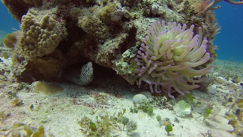 And, finally, yet another example of the wonders of Cozumel diving.