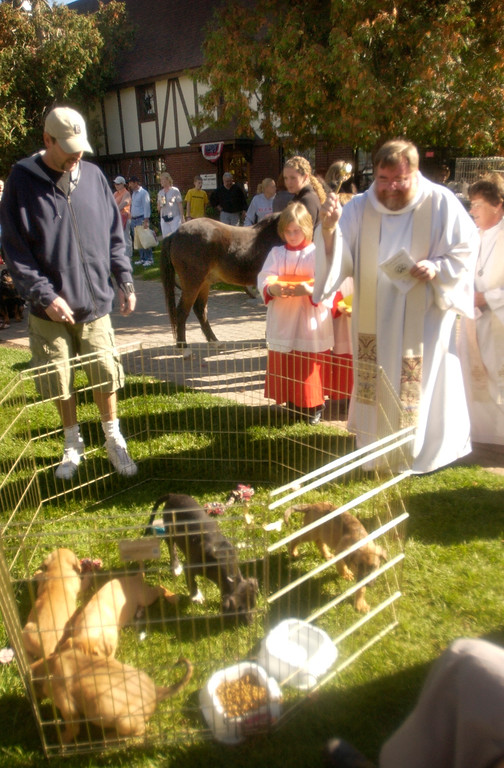 . Canterbury Village blessing of dogs, cats and other pets. Here Father Chris Berg blesses some puppies from Whiskers Cat & Dog Rescue. The Oakland Press/DOUG BAUMAN