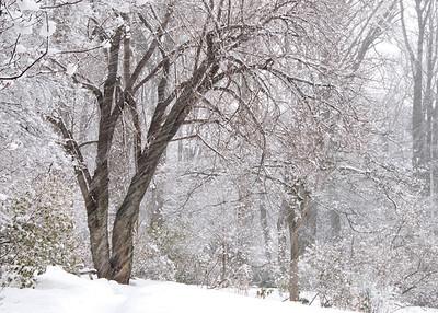 snow at Jenkins Arboretum