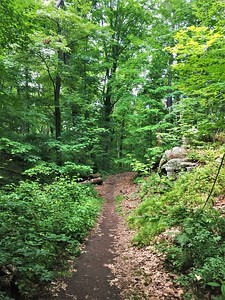 Stoneham, MA:  Middlesex Fells Reservation.  Miles and miles of running on these thickly wooded trails over the years.  A few hours of walking this time.
