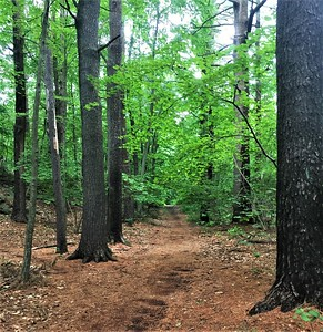 Stoneham, MA:  Middlesex Fells Reservation.   Palm trees are great, but it was really nice to have pine needles underfoot again.