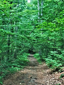 Stoneham, MA:  Middlesex Fells Reservation.   Trees release negative ions that block the stress-inducing hormone Cortisol in your system.  No wonder you feel so much more relaxed in the forest.