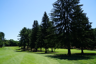 Needham Golf Club:  Hole #5, from the fairway.  Last time I saw these half-dozen pines, I was taller than they were.