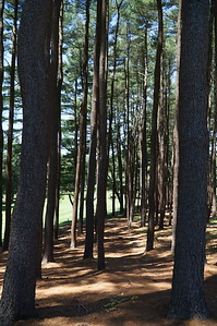 Needham Golf Club:  The woods between #5 and #6.  I was looking forward to playing pinball off the pinestraw, but I never ended up in the woods!