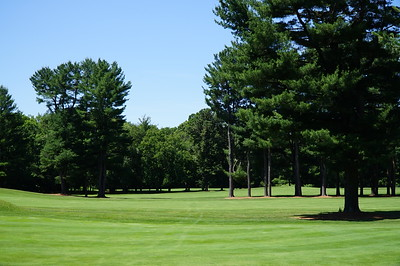 Needham Golf Club:  looking from #2 across #1 and #9 fairways, to the practice area beyond the last row of trees.  Love these pines!!