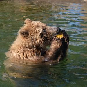 181029 Oakland Zoo-00130