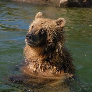 181029 Oakland Zoo-00229