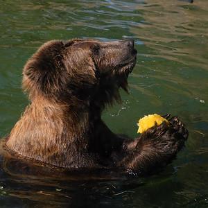 181029 Oakland Zoo-00174