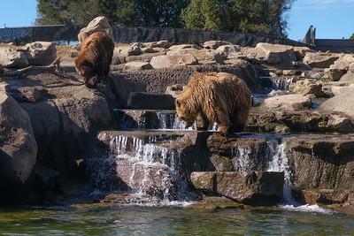 181029 Oakland Zoo-00290