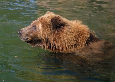 181029 Oakland Zoo-00273