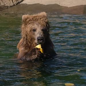 181029 Oakland Zoo-00120