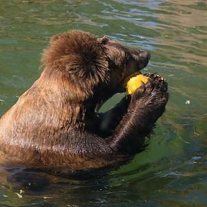181029 Oakland Zoo-00172