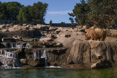 181029 Oakland Zoo-00279