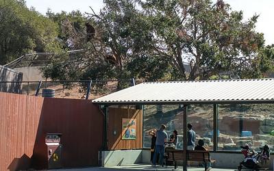 181029 Oakland Zoo-00080