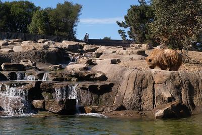 181029 Oakland Zoo-00277