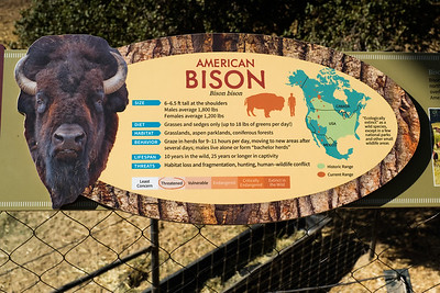 181029 Oakland Zoo-00070