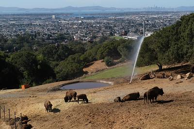 181029 Oakland Zoo-00064
