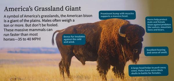 181029 Oakland Zoo-00067